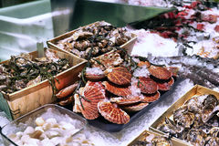 Showcase of seafood Royalty Free Stock Photo