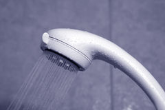 Shower. Head royalty free stock photo