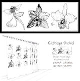 Shower curtain Vanda Orchid Cattleya pincil sketch Royalty Free Stock Photos