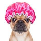 Shower dog Stock Photo