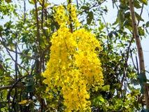 Shower flowers in summer. Yellow flower in summer,Flowers of golden shower tree in the garden street home stock photos