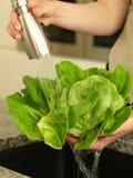 Shower of lettuce Stock Image