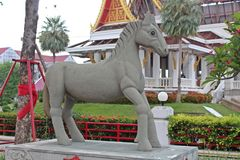 Showform av häståret i 12 år cirkulering royaltyfri foto