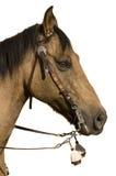 Showhorse Stock Photography