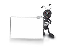 Showing ant Stock Image
