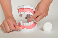 Showing how to use floss, dental care concept Stock Image