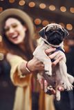 Close up of calm puppy in the hands of excited pet owner. Showing the pet. Little puppy staying calm while being in the hands of his emotional owner royalty free stock photo