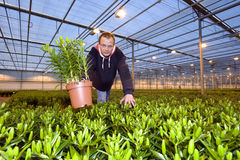 Showing a plant Stock Image