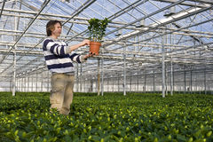 Showing a plant Stock Photo