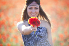 Showing poppies bouquet Royalty Free Stock Image