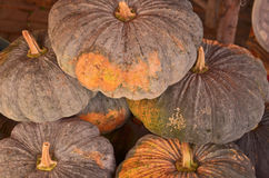 Showing pumpkin for sale Royalty Free Stock Photo