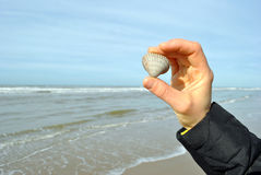 Showing a shell on the beach Stock Images