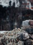 Stone wall with a green plant stock photography