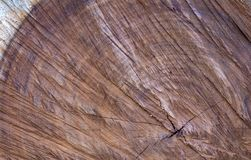 Wooden background - Cross section of a large old Tree royalty free stock image