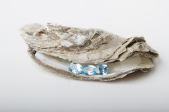Showing treasure. Three blue topaz hold on by an oyster shell Stock Photo