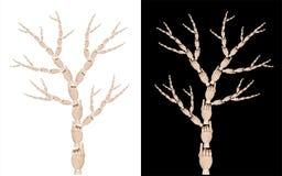 Showing tree Stock Image