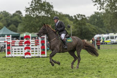 Showjumping at the Edenbridge and Oxted Agricultural show 2015 Stock Photo