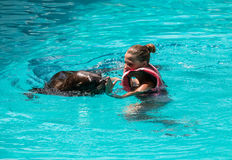 Shows sea lions in the pool, Stock Photo