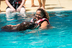 Shows sea lions in the pool,, Oasis Park, Fuerteventura Stock Images