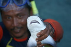 Shows a small shark. A fisherman shows a small shark in Karimun Java royalty free stock photography