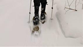 Showshoer walking in deep snow stock image