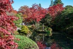 Shoyo en日本庭院在日光 免版税图库摄影