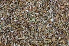 Shredded e cortado em partes pequenas secou partes superiores do milho e do sorgo Foto de Stock