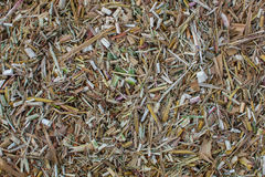 Shredded and sliced into small pieces dried tops of corn and sorghum. Stock Photo
