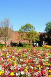 Shrewsbury Castle and flowerbeds. Royalty Free Stock Image