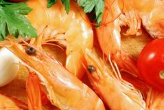 Shrimp 004 bis Stock Photography