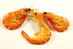 Shrimp 006 bis Stock Photo