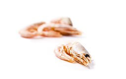 Shrimp. Four shrimps laying on a white background. Shallow focus Stock Images