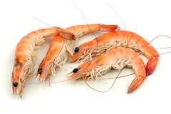 Shrimp. Four shrimp in a white background Royalty Free Stock Photos
