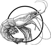 Shrimp stock illustration