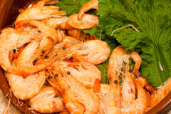 Shrimp Royalty Free Stock Photo