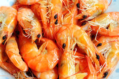 Shrimp. Many steamed raw shrimp in a pile Stock Images