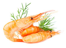Shrimp. With dill on white background Royalty Free Stock Photo