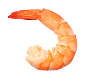 Shrimp. A cooked shrimp on white background Stock Photos