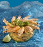 Shrimp. Glass bowl of shrimp garnished with parsley and lime slice on side on turquoise backdrop and ice Royalty Free Stock Photo