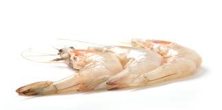 Shrimp. Prawn or shrimp, isolated on white royalty free stock photo