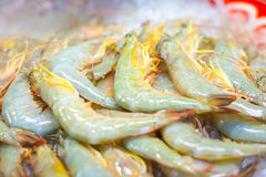 Shrimp. Caridea is an infraorder within the order Decapoda, generally known as shrimp Stock Photo