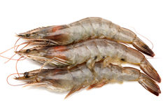 Shrimp Stock Photos
