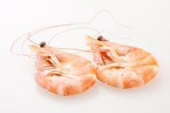 Shrimp. Isolated on white background Royalty Free Stock Image