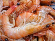 The shrimp. The red delicious shrimp in chinese food Royalty Free Stock Image