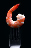 Shrimp Stock Images