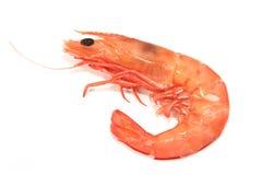 Free Shrimp Stock Image - 3317101