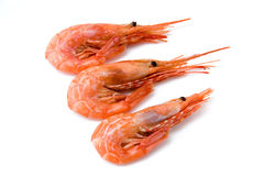 Shrimp. Three prepared shrimp on the white background stock image