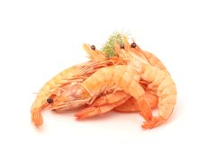 shrimp Imagem de Stock Royalty Free