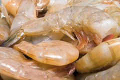Shrimp. A large pile of headless shrimp ready to be cleaned Royalty Free Stock Photos