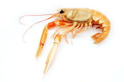 Shrimp. Isolated on white background Stock Photography